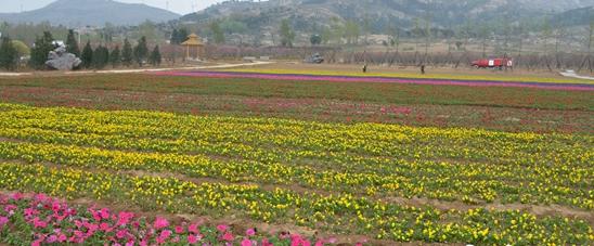 方城县:万亩花海打造壮美山水田园